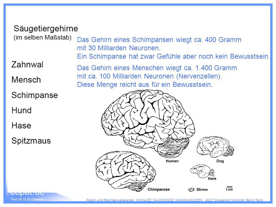 Das Gehirn eines Schimpansen wiegt ca. 400 Gramm
