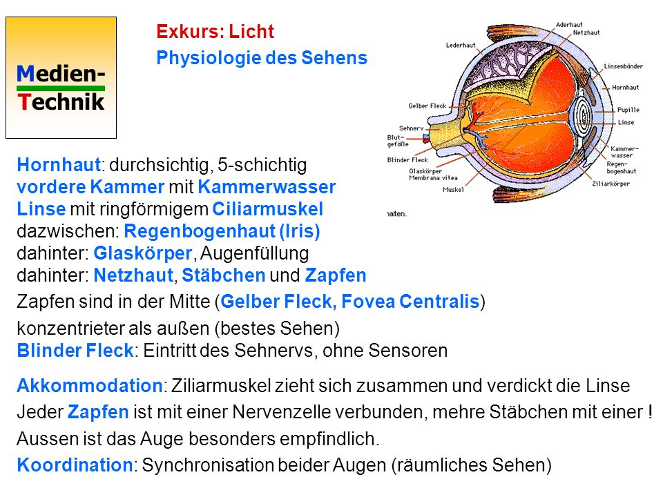 Exkurs: Licht Physiologie des Sehens.