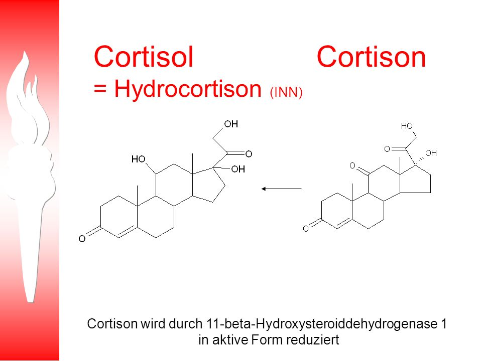 Cortisol Cortison = Hydrocortison (INN)