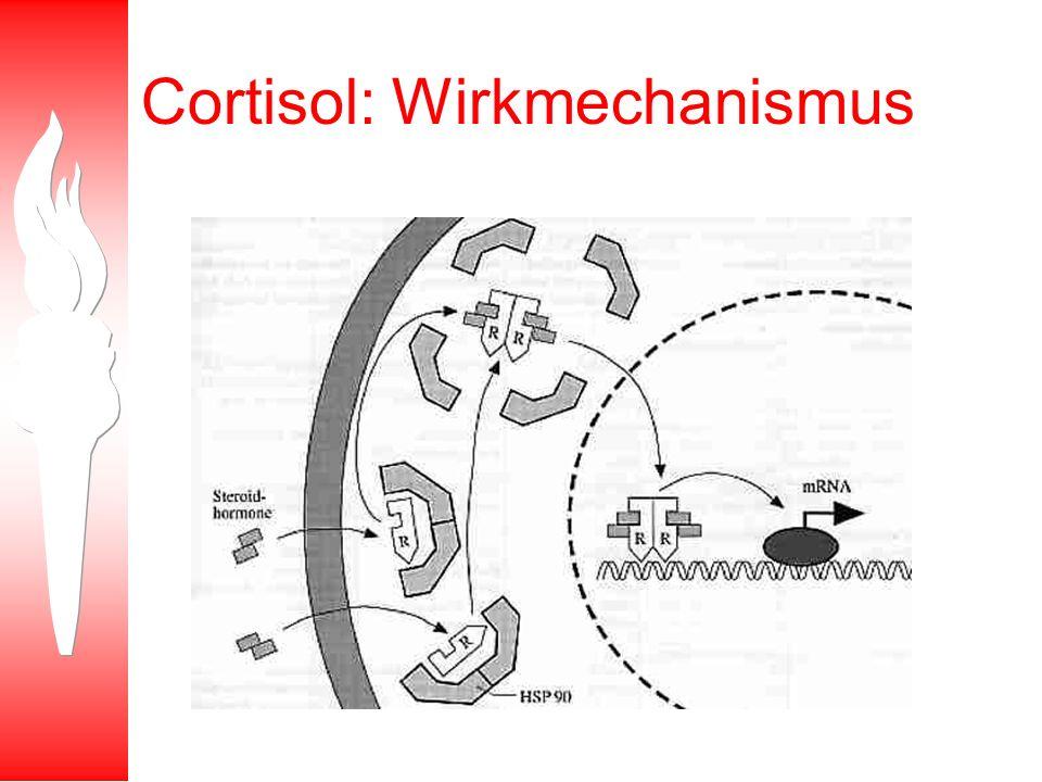 Cortisol: Wirkmechanismus