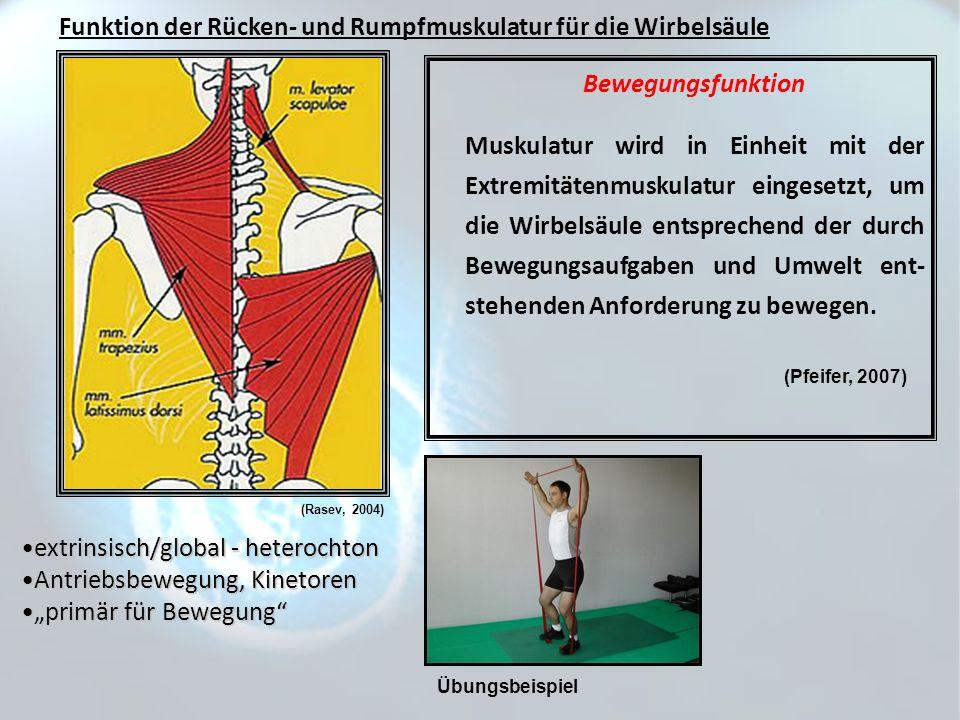 Funktion der Rücken- und Rumpfmuskulatur für die Wirbelsäule