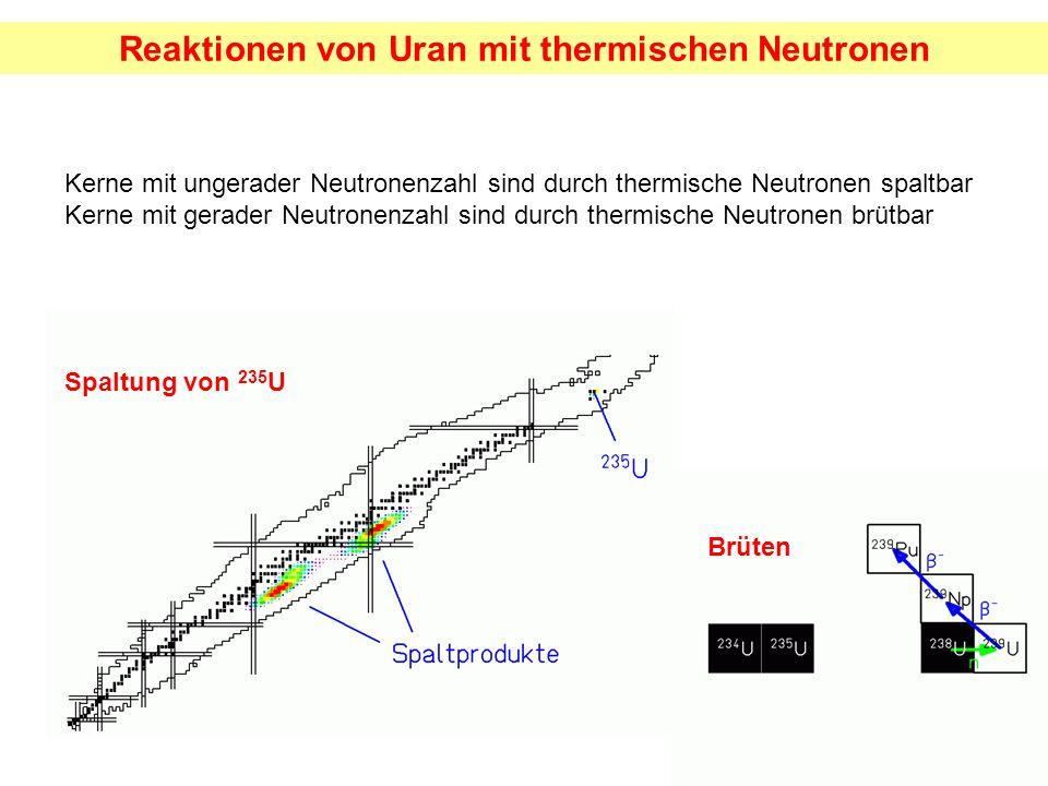 Reaktionen von Uran mit thermischen Neutronen