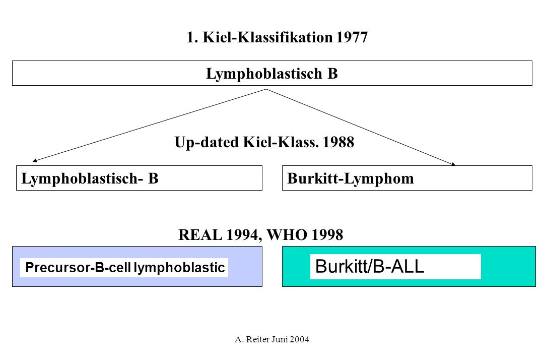 Burkitt/B-ALL 1. Kiel-Klassifikation 1977 Lymphoblastisch B