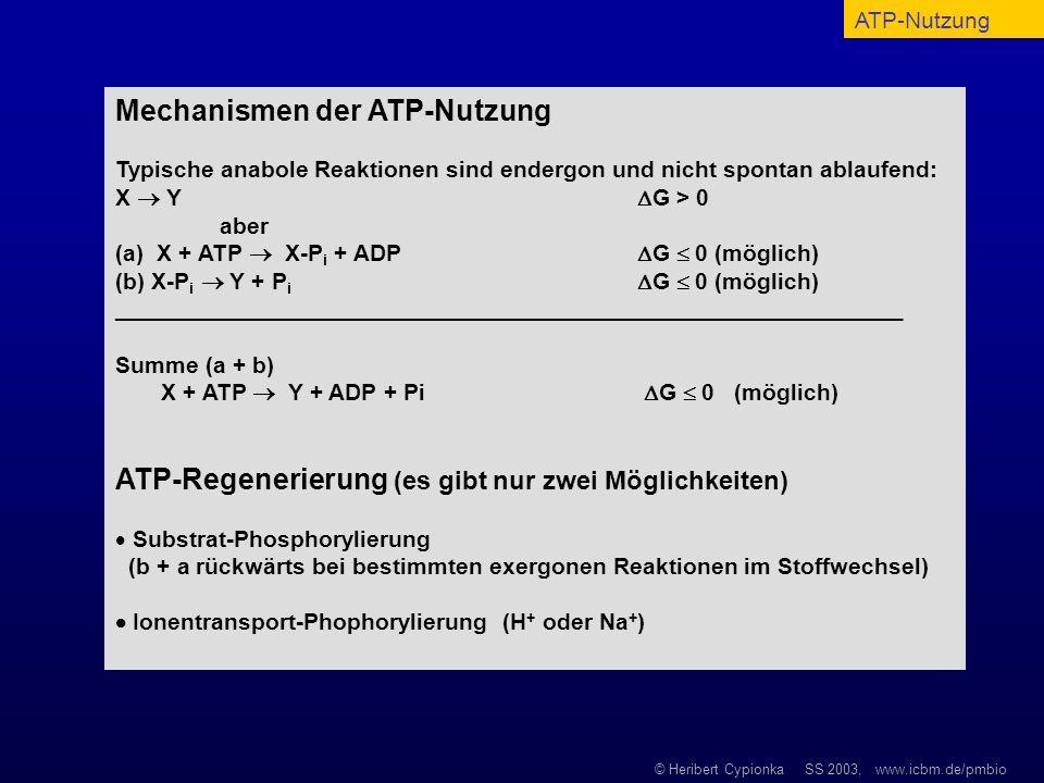 Mechanismen der ATP-Nutzung