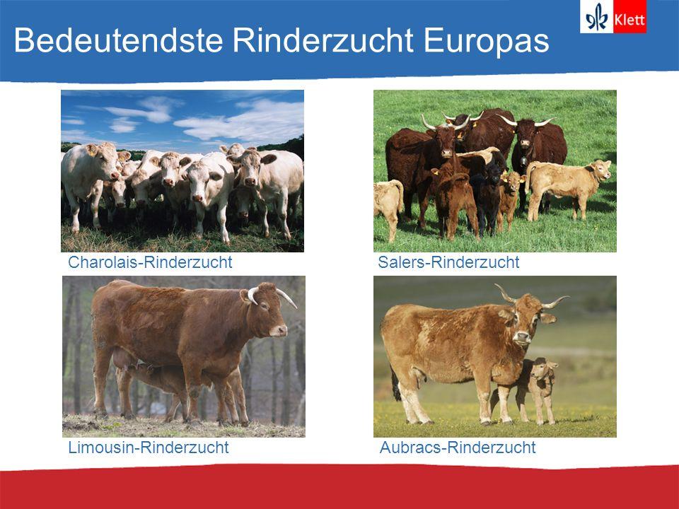 Bedeutendste Rinderzucht Europas