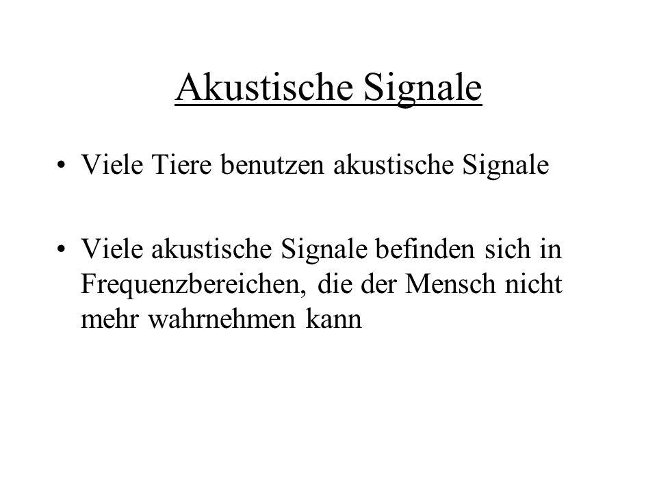 Akustische Signale Viele Tiere benutzen akustische Signale