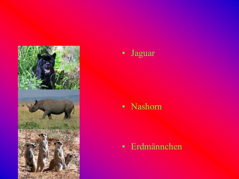 Jaguar Nashorn Erdmännchen