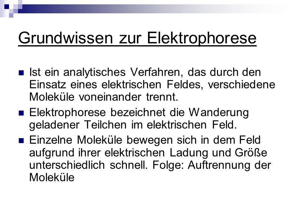 Grundwissen zur Elektrophorese