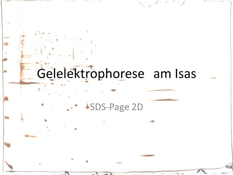 Gelelektrophorese am Isas