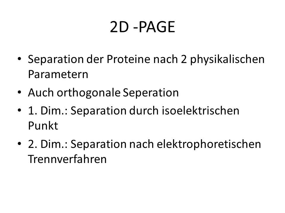 2D -PAGE Separation der Proteine nach 2 physikalischen Parametern