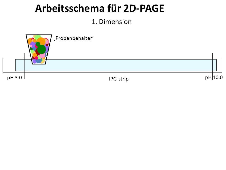 Arbeitsschema für 2D-PAGE