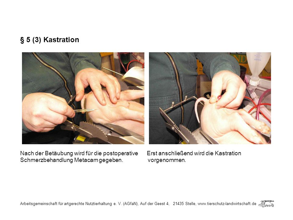 § 5 (3) Kastration