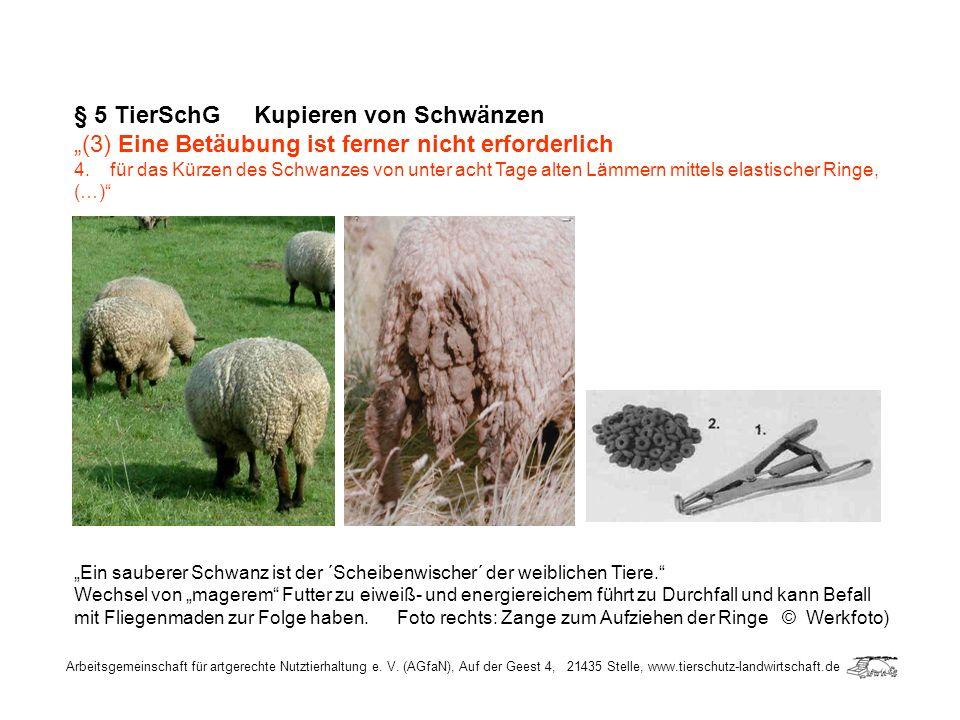 § 5 TierSchG Kupieren von Schwänzen