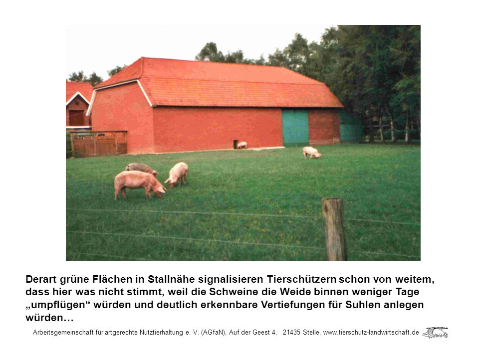 """Derart grüne Flächen in Stallnähe signalisieren Tierschützern schon von weitem, dass hier was nicht stimmt, weil die Schweine die Weide binnen weniger Tage """"umpflügen würden und deutlich erkennbare Vertiefungen für Suhlen anlegen würden…"""