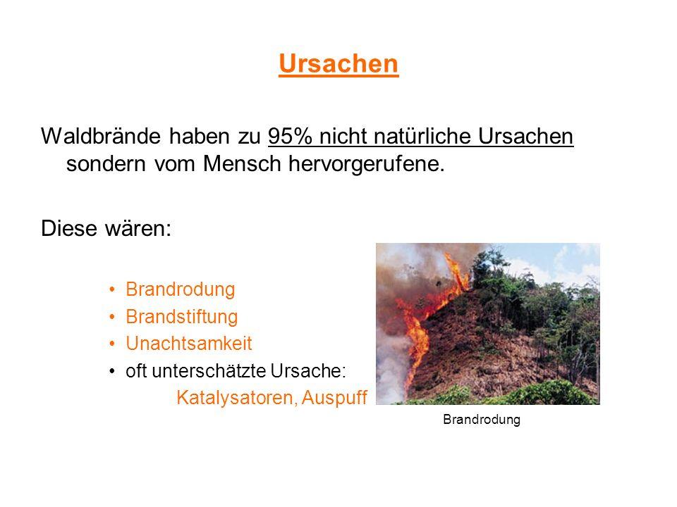 Ursachen Waldbrände haben zu 95% nicht natürliche Ursachen sondern vom Mensch hervorgerufene. Diese wären: