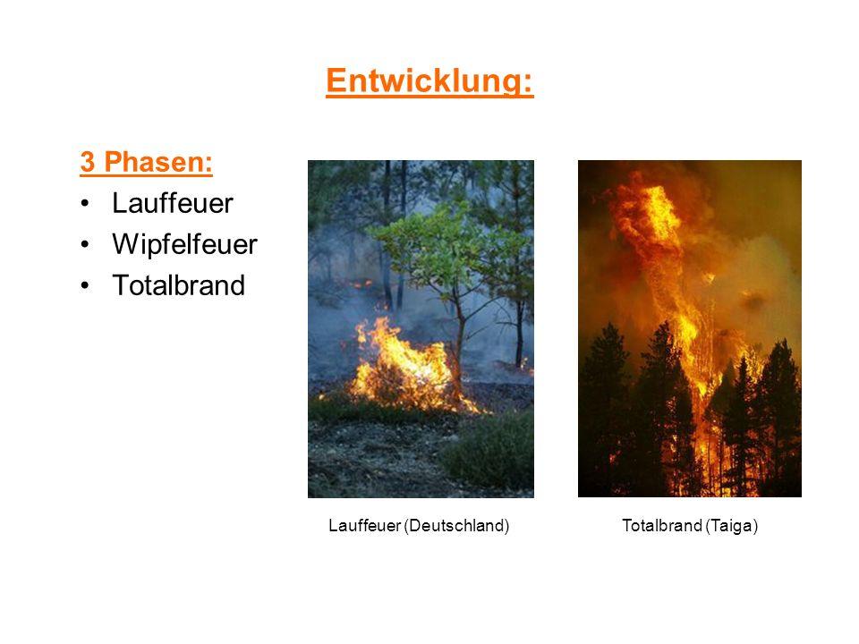 Entwicklung: 3 Phasen: Lauffeuer Wipfelfeuer Totalbrand