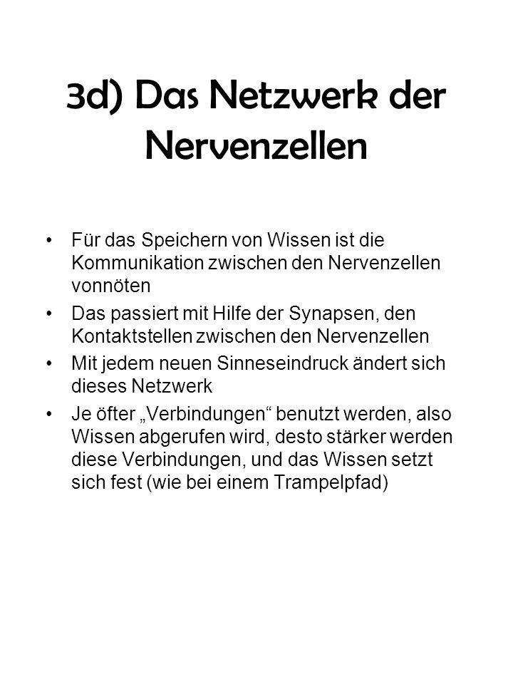 3d) Das Netzwerk der Nervenzellen