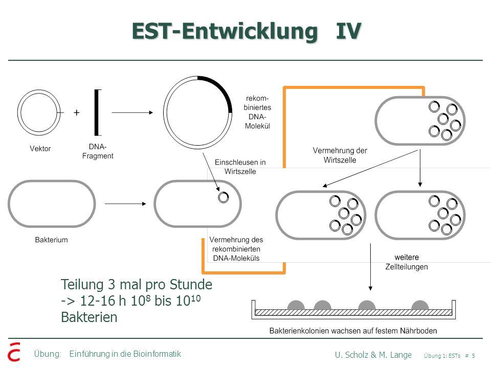EST-Entwicklung IV Teilung 3 mal pro Stunde -> 12-16 h 108 bis 1010 Bakterien