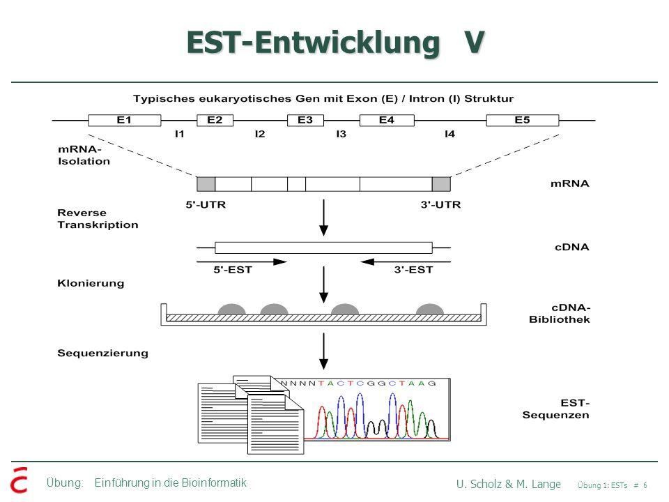 EST-Entwicklung V