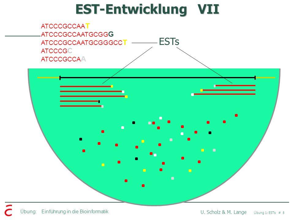 EST-Entwicklung VII ESTs ATCCCGCCAAT ATCCCGCCAATGCGGG