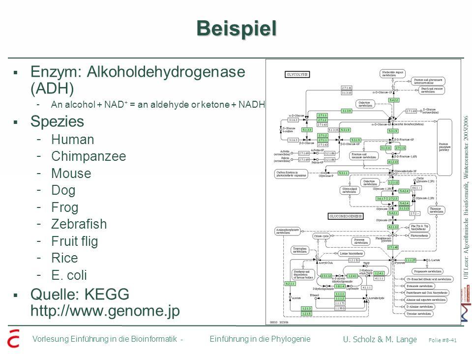 Beispiel Enzym: Alkoholdehydrogenase (ADH) Spezies