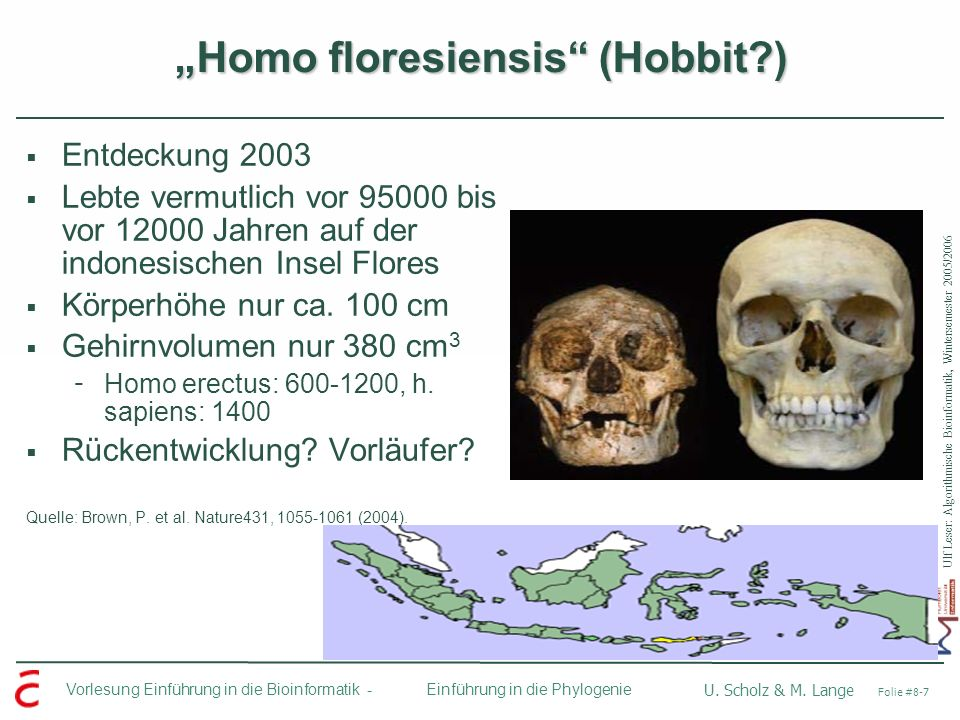 """Homo floresiensis (Hobbit )"