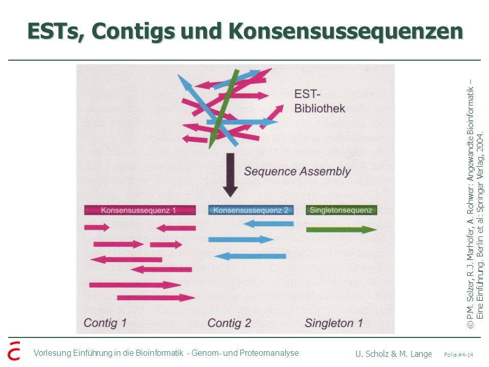 ESTs, Contigs und Konsensussequenzen