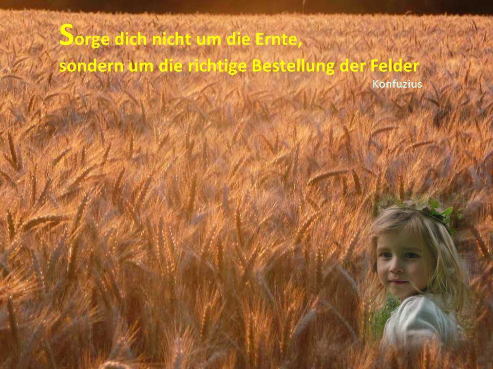 Sorge dich nicht um die Ernte,