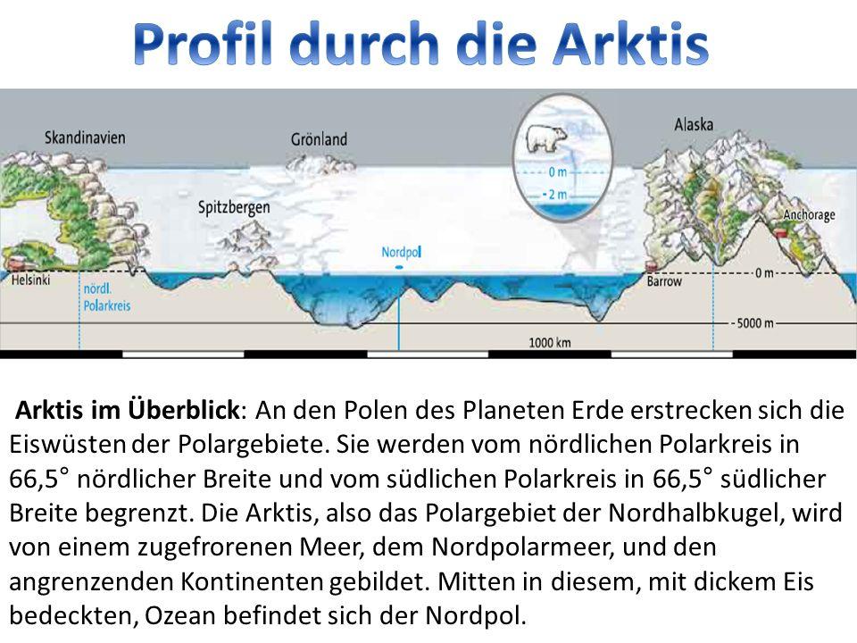 Profil durch die Arktis
