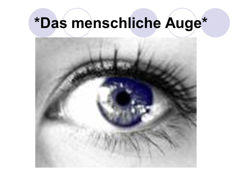 *Das menschliche Auge*