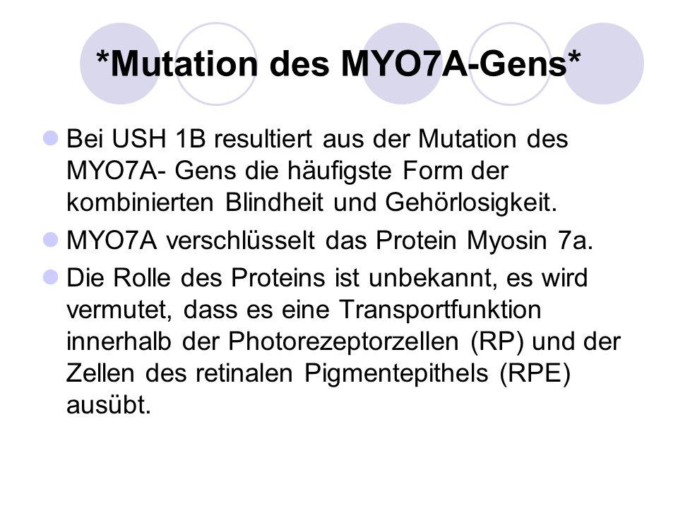 *Mutation des MYO7A-Gens*