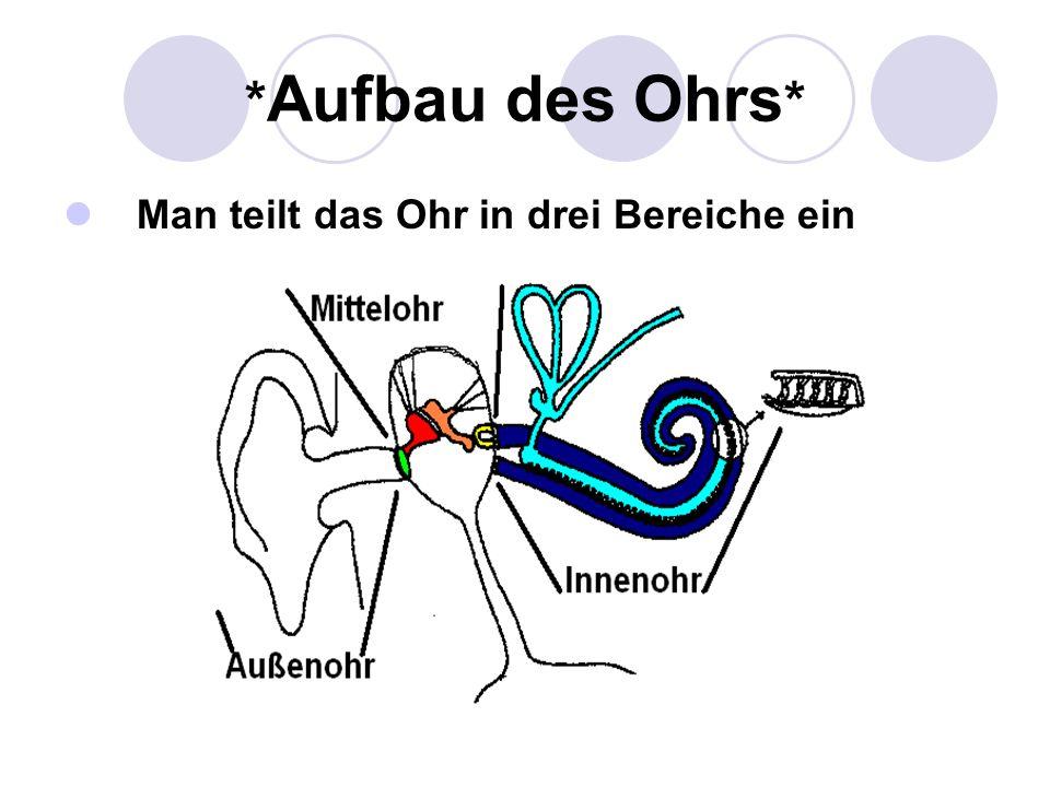 *Aufbau des Ohrs* Man teilt das Ohr in drei Bereiche ein
