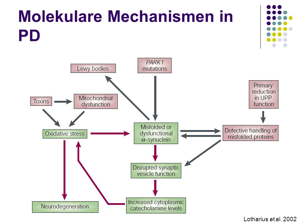 Molekulare Mechanismen in PD