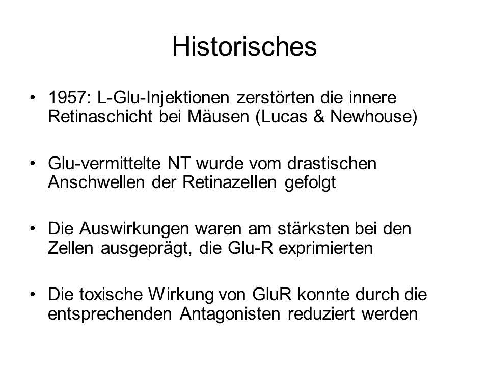 Historisches 1957: L-Glu-Injektionen zerstörten die innere Retinaschicht bei Mäusen (Lucas & Newhouse)
