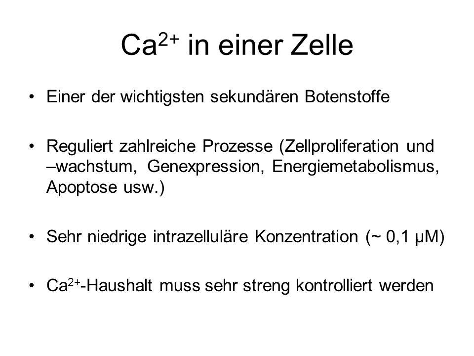 Ca2+ in einer Zelle Einer der wichtigsten sekundären Botenstoffe