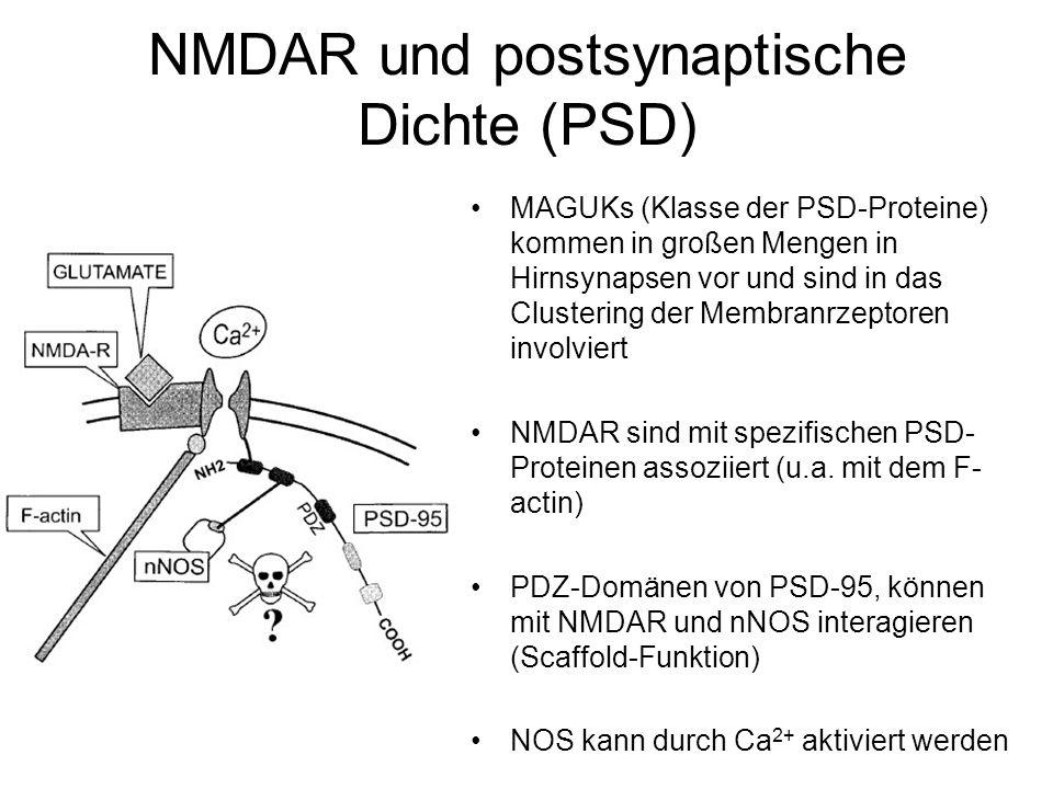 NMDAR und postsynaptische Dichte (PSD)