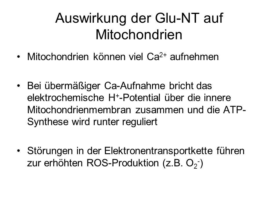 Auswirkung der Glu-NT auf Mitochondrien