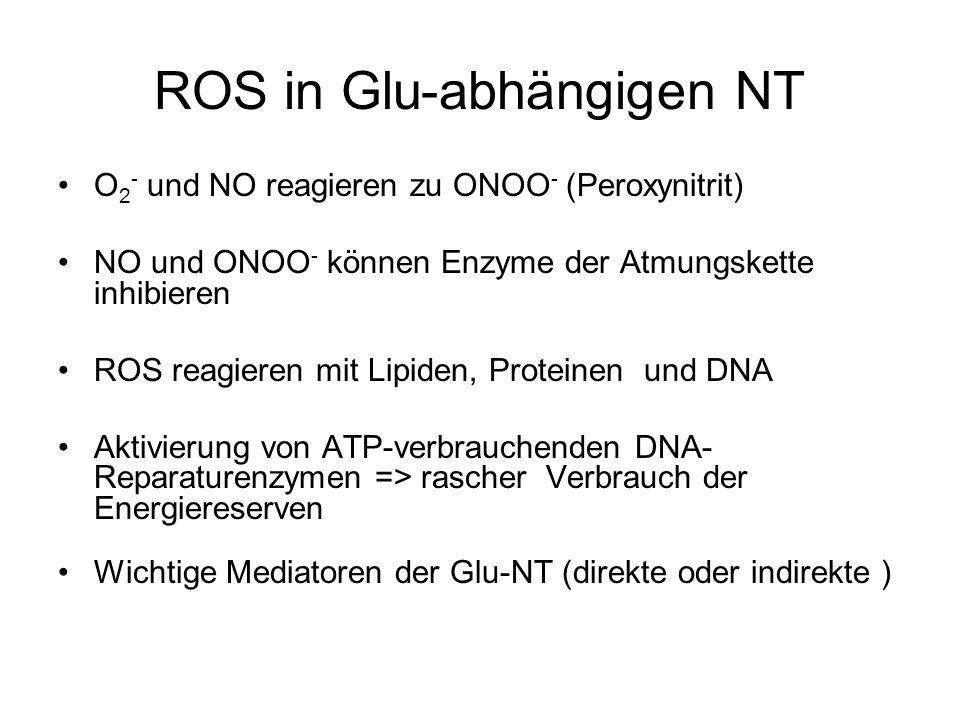 ROS in Glu-abhängigen NT