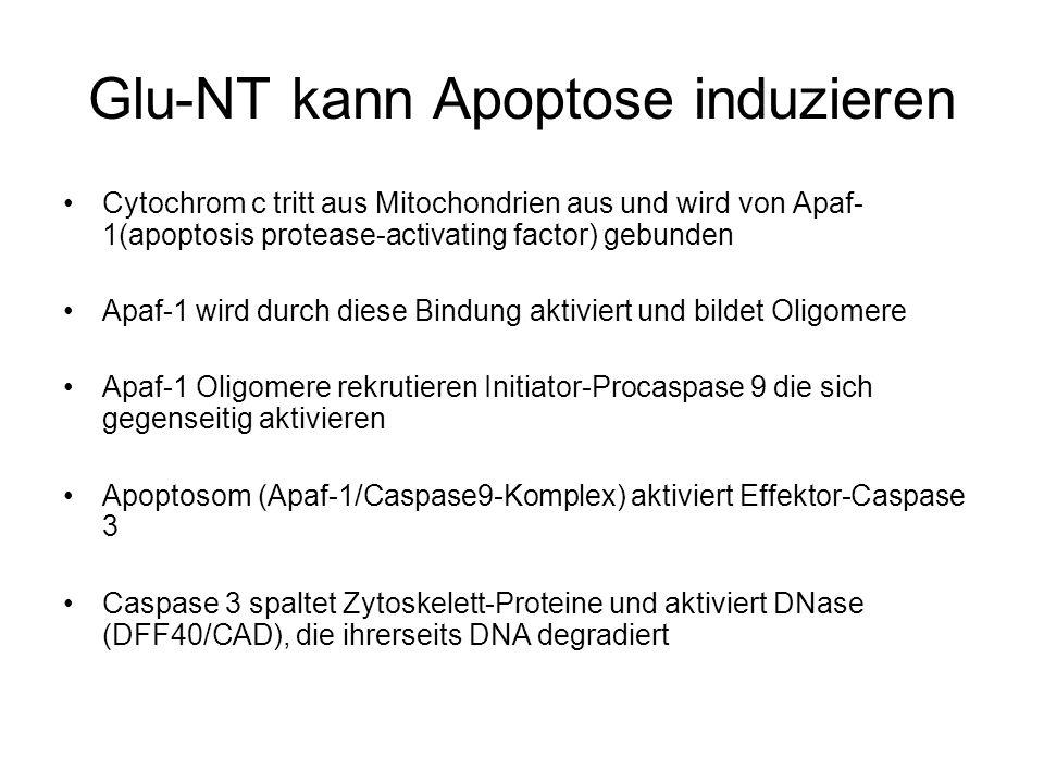 Glu-NT kann Apoptose induzieren