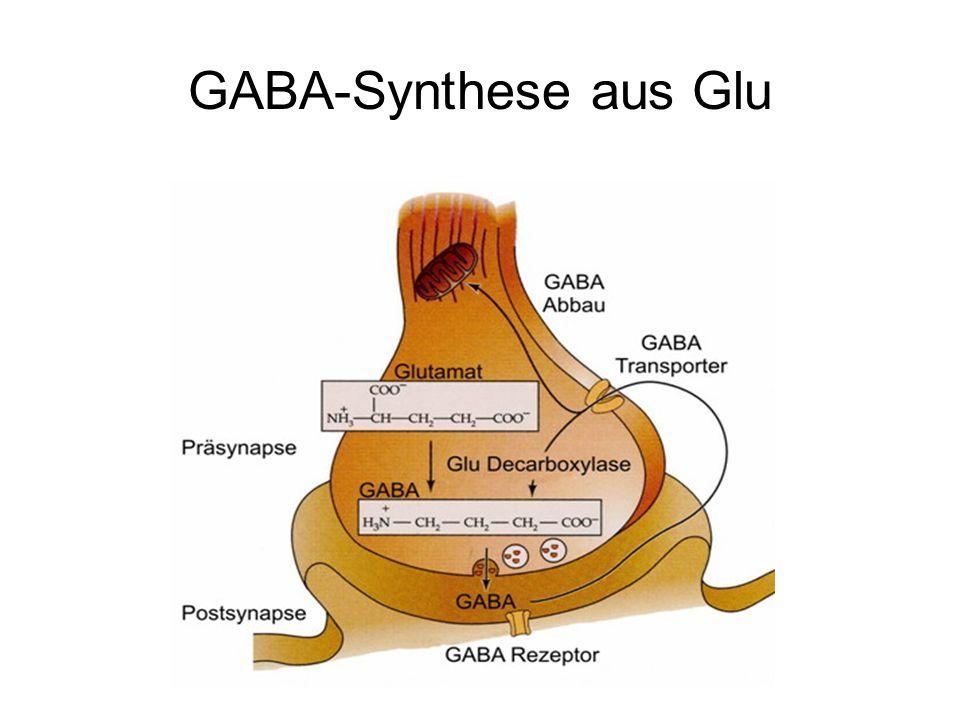 GABA-Synthese aus Glu