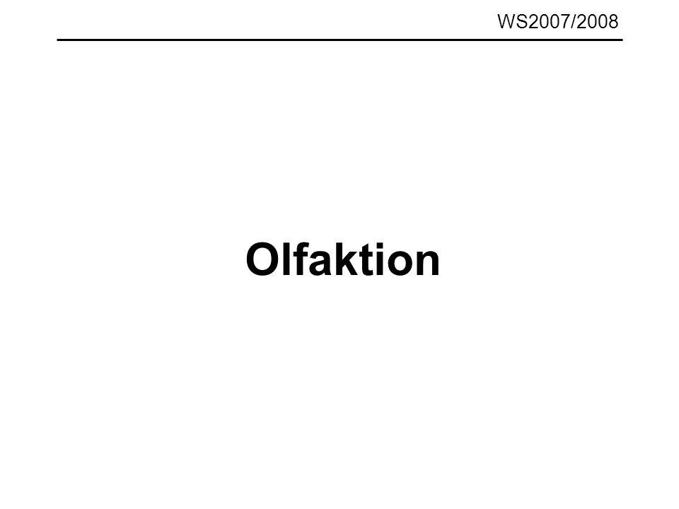 WS2007/2008 Olfaktion