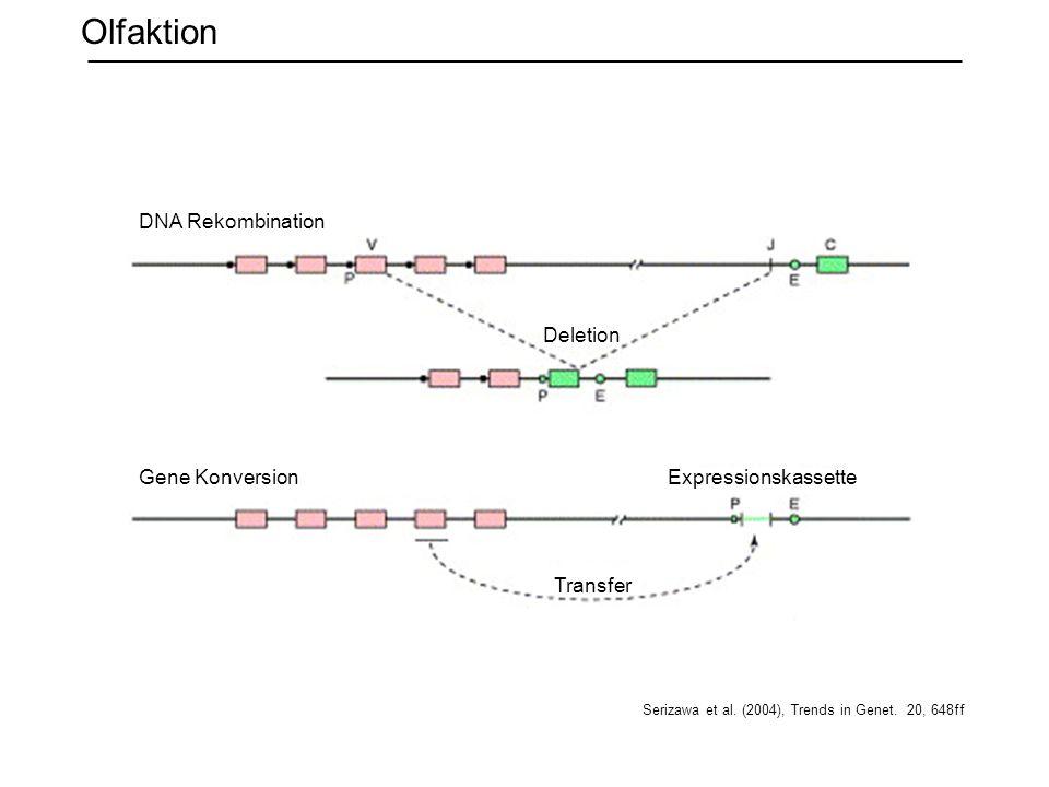 Olfaktion DNA Rekombination Deletion Gene Konversion