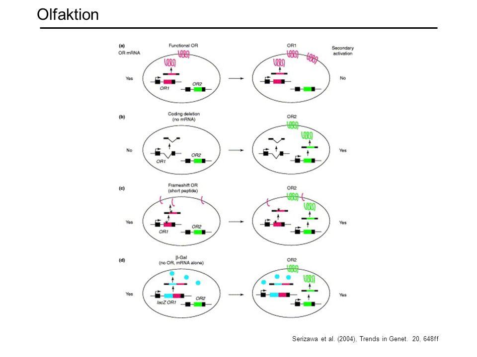 Olfaktion Serizawa et al. (2004), Trends in Genet. 20, 648ff