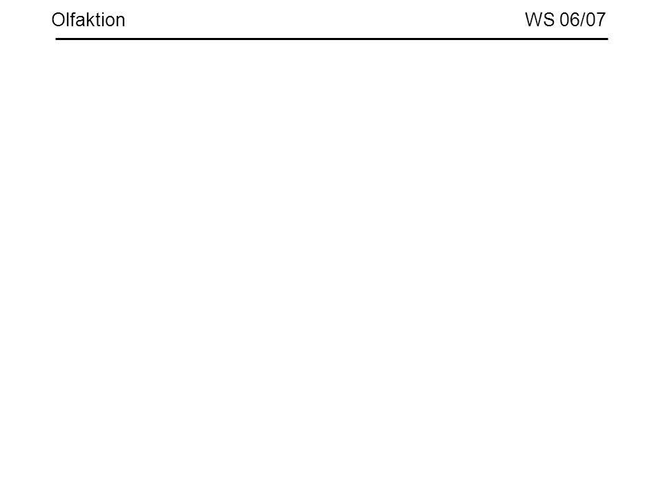 Olfaktion WS 06/07
