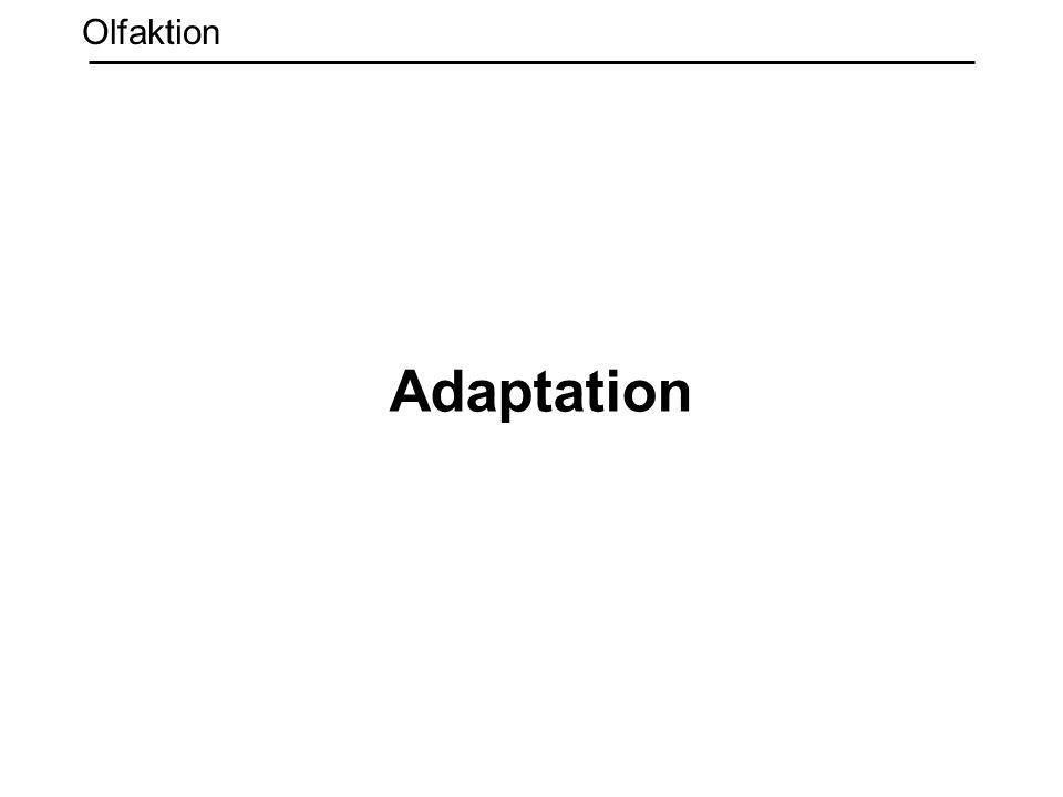 Olfaktion Adaptation