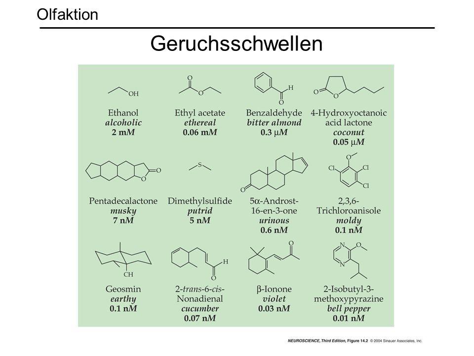Olfaktion Geruchsschwellen