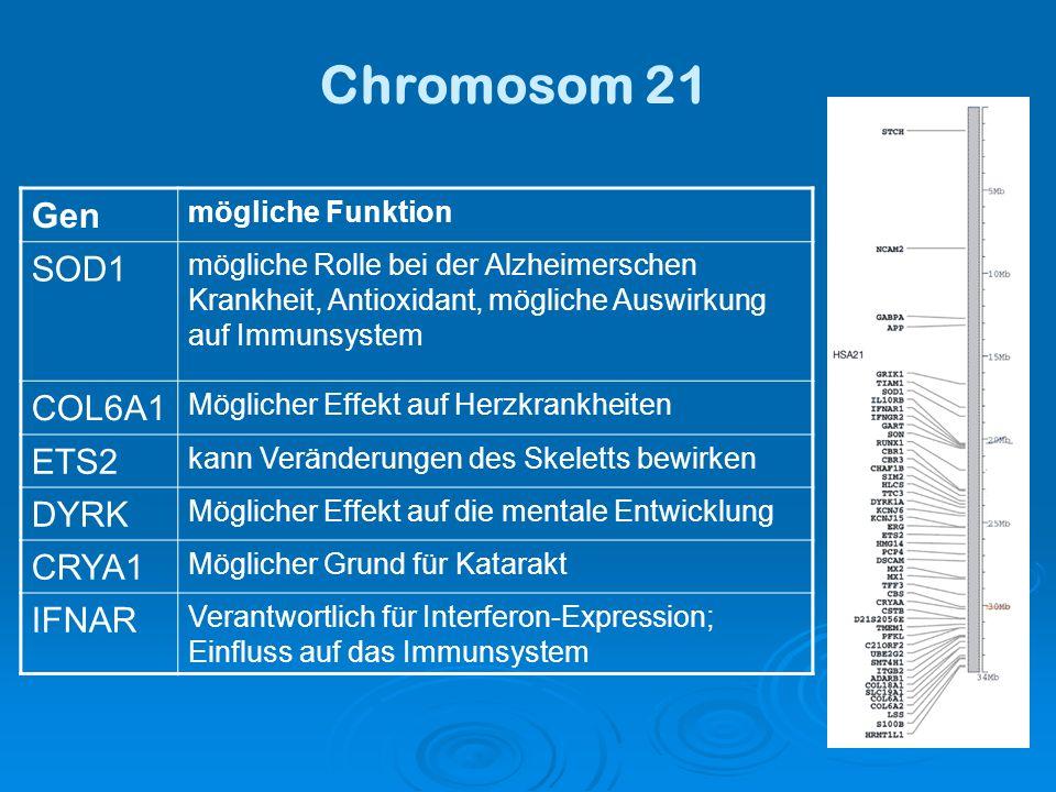 Chromosom 21 Gen SOD1 COL6A1 ETS2 DYRK CRYA1 IFNAR mögliche Funktion