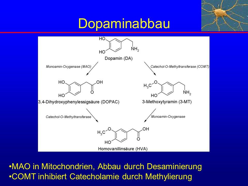 Dopaminabbau MAO in Mitochondrien, Abbau durch Desaminierung