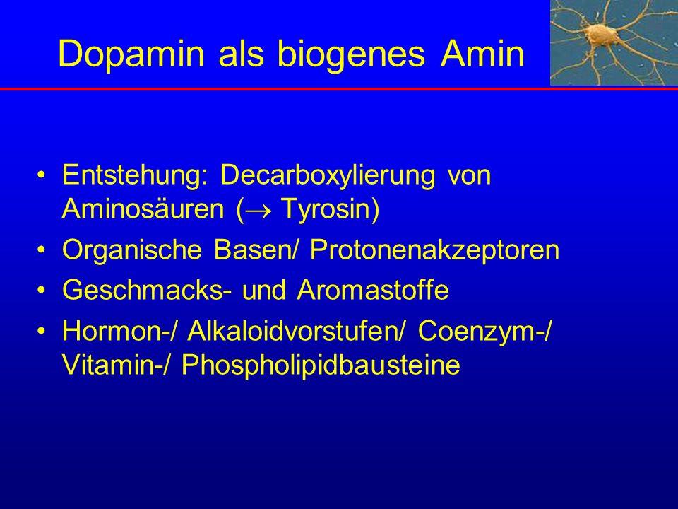 Dopamin als biogenes Amin