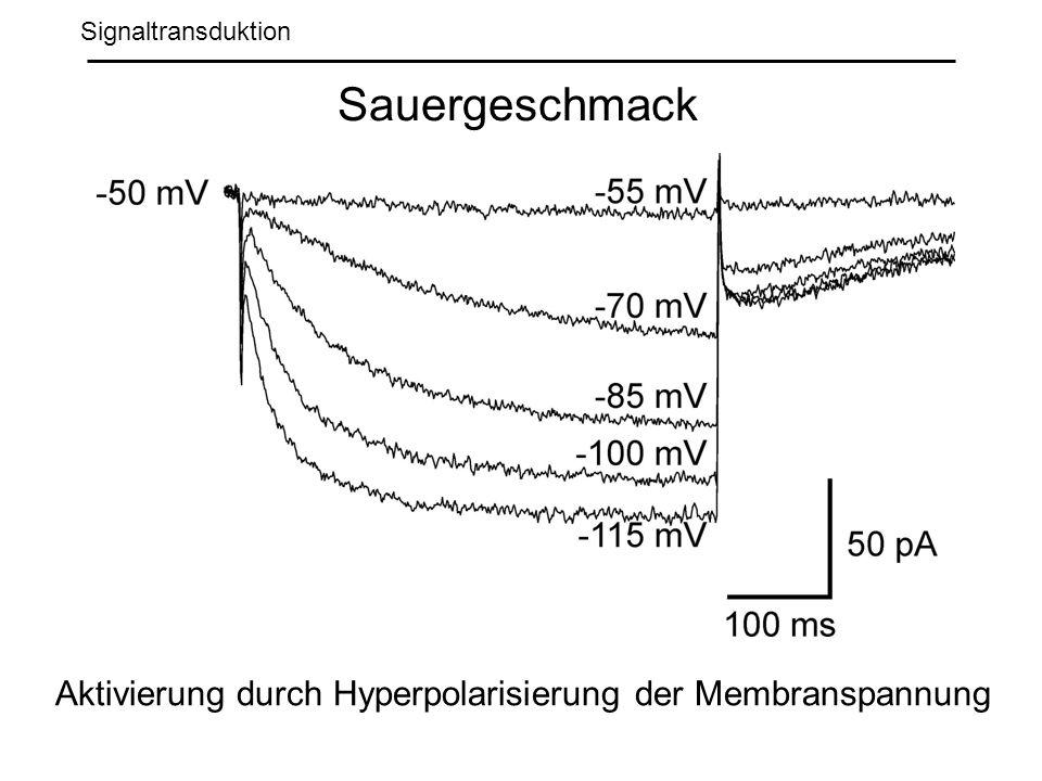 Signaltransduktion Sauergeschmack Aktivierung durch Hyperpolarisierung der Membranspannung
